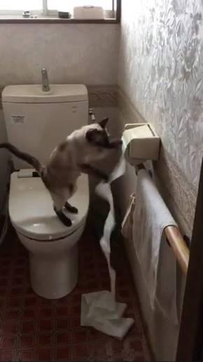 トイレットペーパー 猫