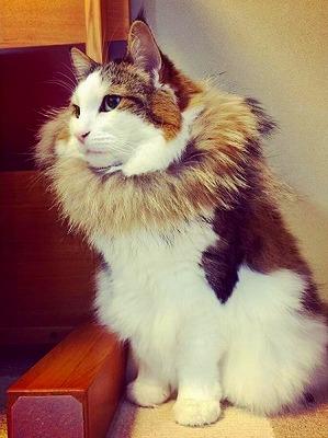 二本足で立つ猫ちゃん