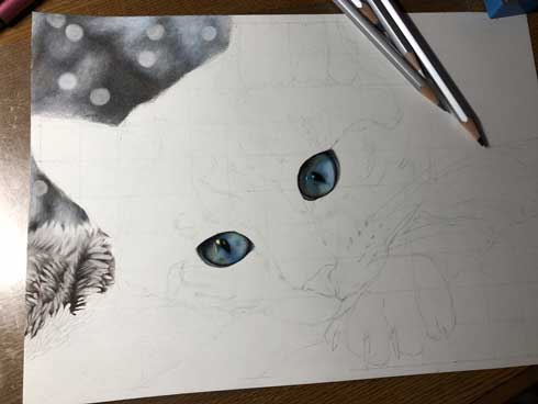 色鉛筆 猫 リアル 毛布 毛並み 音海はる 18歳 絵 途中経過