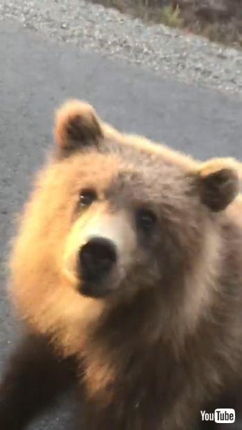 好奇心いっぱいの子クマ