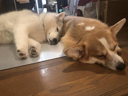 くっついて眠る2匹