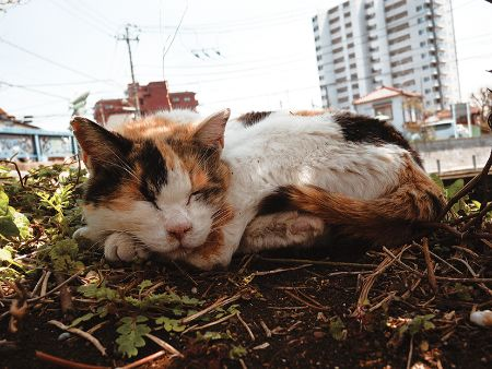 写真展「船橋日記〜いつも通っている道〜」より「眠る猫」