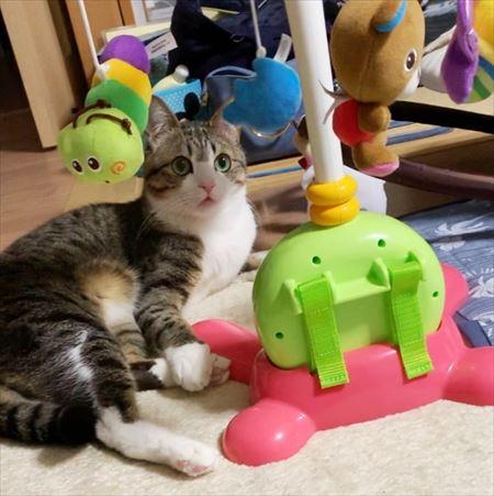 赤ちゃんのおもちゃって面白いニャン ちょっとずつ赤ちゃんとの距離を縮めるキジ白の猫 すずめちゃん ねとらぼ