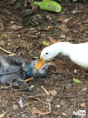 Odd Pair of Pets