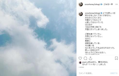 石田ゆり子 ばぶお 猫 どうなった 逝去