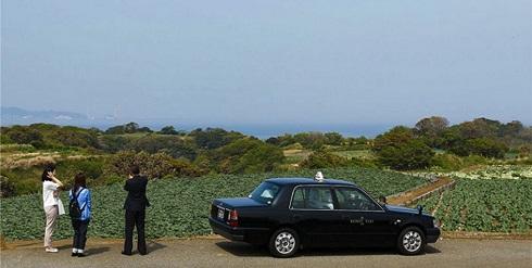 みさきめぐりタクシーとキャベツ畑