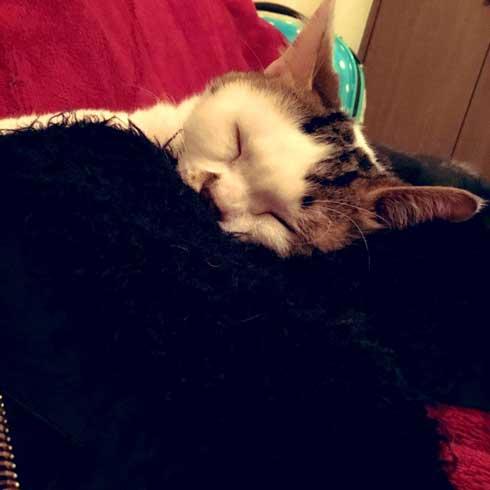 袖 ハマる 詰まる 猫 コマリ カオナシ かわいい