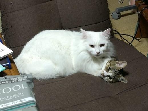 猫 謎の状態