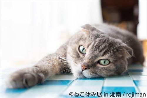 ねこ休み展 湘南