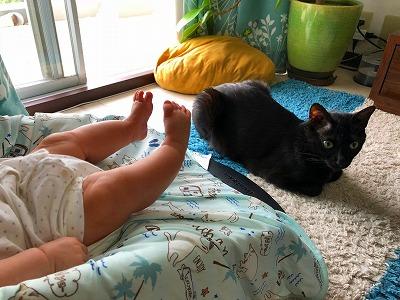 子守をする3匹の猫