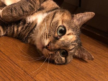 奥さんの代わりに横で寝てた猫ちゃん