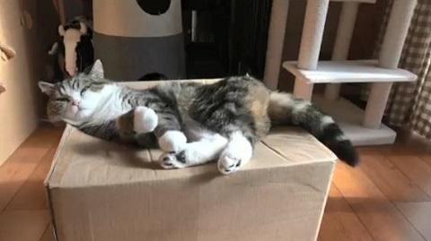 猫食いボックス