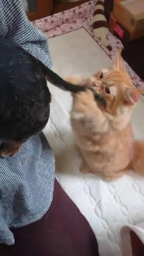 猫 しっぽ 犬の爪切り