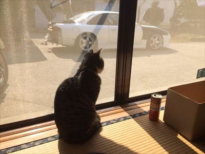 車から出てくる猫ちゃん