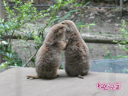 上野動物園 モノレール 休止