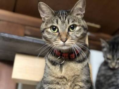 イエベブルベ 猫 ナムヨム