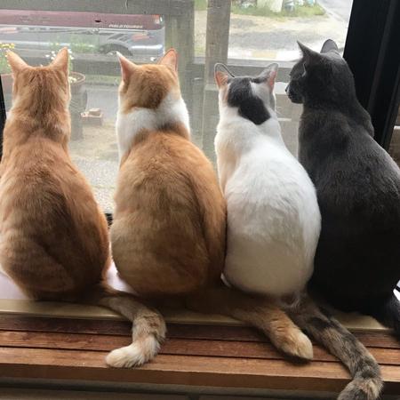 猫4匹の背中