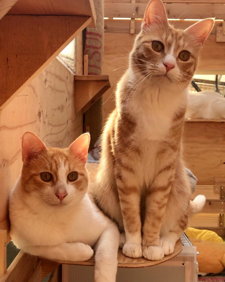 猫ちゃん2匹