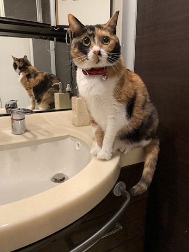 ドライヤー 大嫌い 敵 見張る 猫 表情 顔 上目遣い みーだん