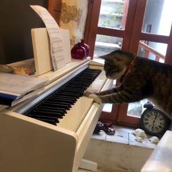 ピアニストネコちゃん