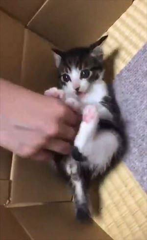 「うーーーっぱ」をする猫ちゃん