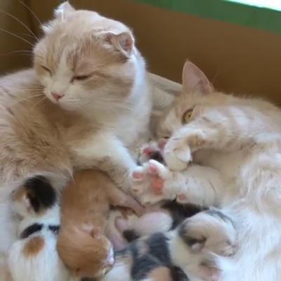 お母さん2匹と子猫