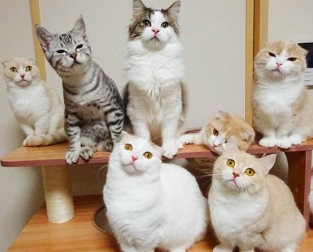 ポージング猫ちゃん