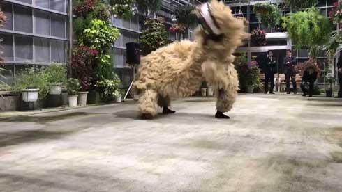 沖縄 獅子舞 迫力 すごい 怖い 琉球獅子舞 大きい