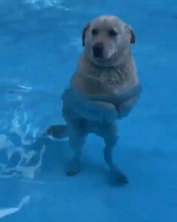 プールに立つわんこ