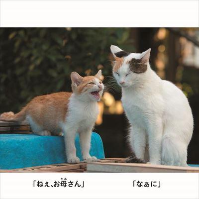 にゃんこ相撲 写真展