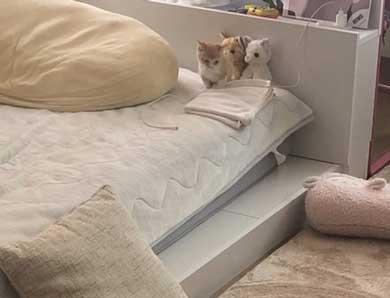 子猫 ぬいぐるみ 一緒 寄り添う 保護 かわいい