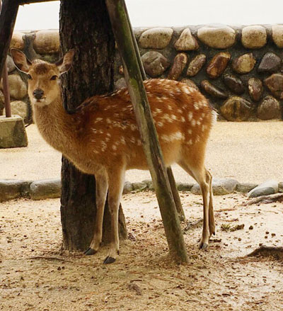 鹿のンティー