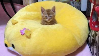 猫 ほっぷ むぎ ドーナツ穴