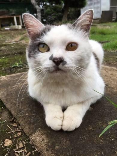 猫 ポン酢君 垣根