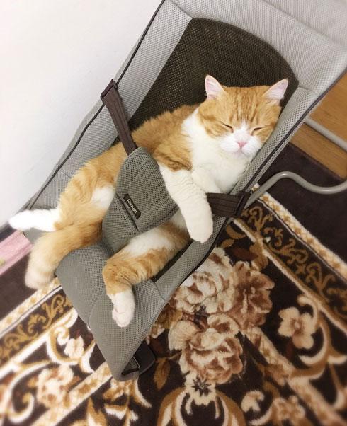 チャイルドシート 入り込んだ 猫 寝顔 足 すっぽり バウンサー