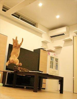 ドアを開けたらビックリの猫さん