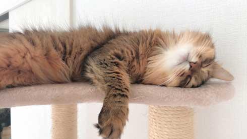 新居 怖がって 出てこない 猫 ソマリ 引っ越し コンロ 隠れる 狭い