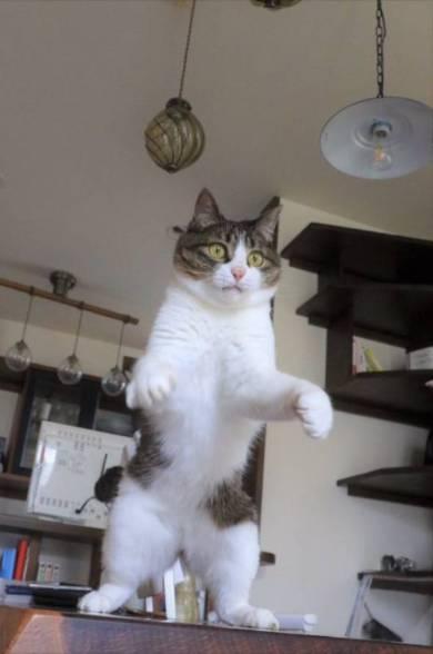ネコ ピーチ