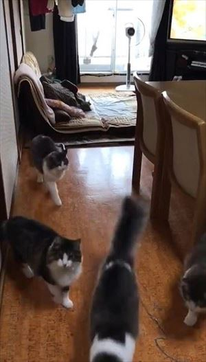 「ごはん」に集まる猫ちゃんたち
