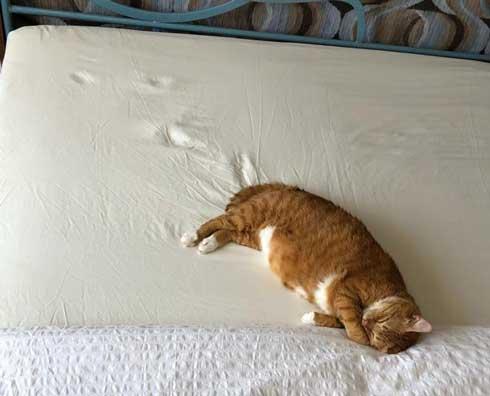 左上 歩いて 力尽きた 猫 ベッド あしあと ポーズ 寝姿 顔