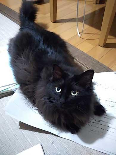 ドローン 初めて見た 猫 黒猫 目 まるい 瞳 ジジ
