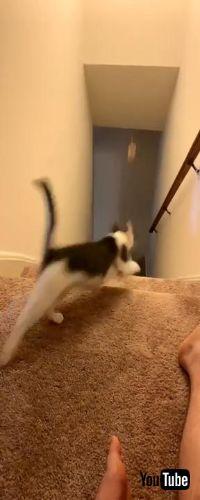 とってこーいで遊ぶネコちゃん