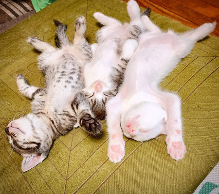頭を手前にして眠る子猫たち