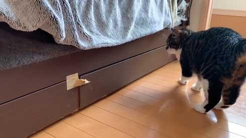 ベッドの下 開かない理由 気付いた 猫 入り込む ガムテープ はがす 引きだし 賢い