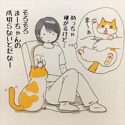 かまって欲しい猫ちゃんたち