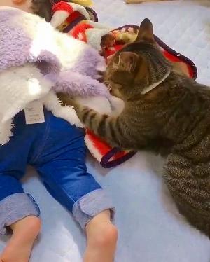 飼い主さんの洗顔を邪魔する猫