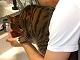 洗顔を邪魔して水を飲む猫さま ひたすら待つ飼い主さんは「これからも猫の奴隷業がんばります」