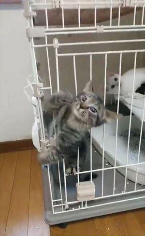 ケージから脱出する猫ちゃん