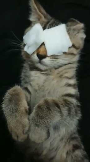 新玉旅館 女将さん 保護 猫 風邪 目 手当て 眼軟膏 大分 別府