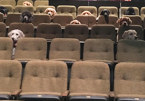 犬が劇場のシートで観覧してる? 介助犬訓練の様子だった